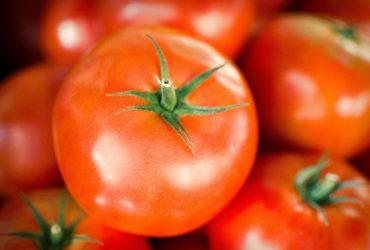 Salad Tomatoes – per KG
