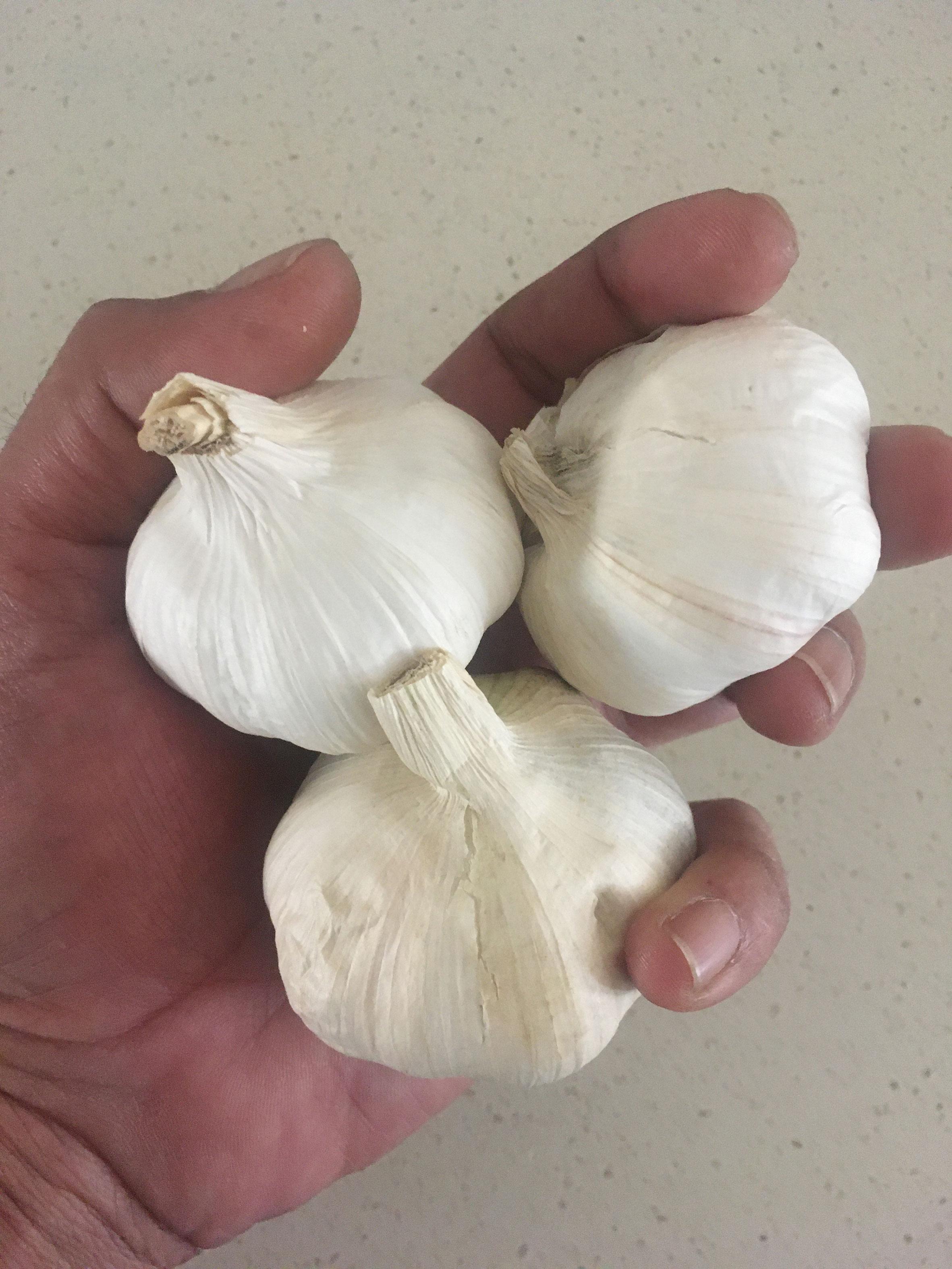 Garlic  – Fresh